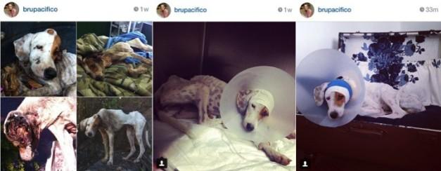 Cadelinha Hope resgatada em péssimas condições de saúde ... *Fonte: IG Bru Pacífico